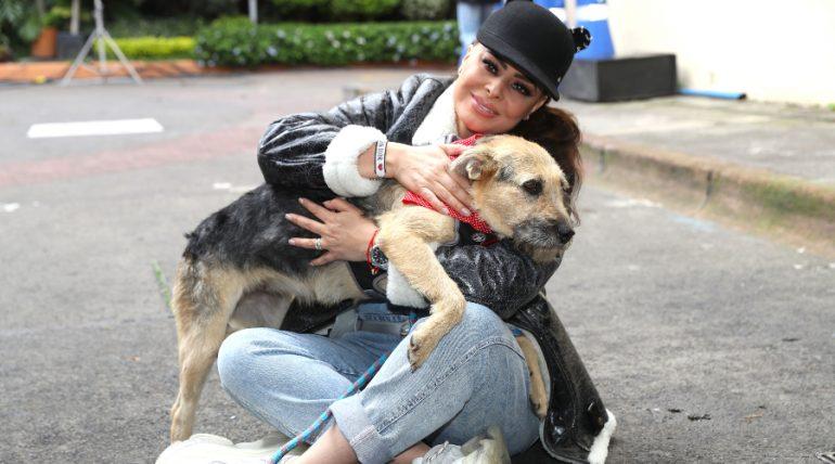 Yadhira Carrillo rescata perros en la calle y los da en adopción ¡FOTOS!. Foto: José Luis Ramos