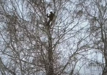 Estudiante en lo alto de un árbol para tomar clases online en Rusia