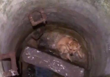Kana perrita atrapada en un pozo