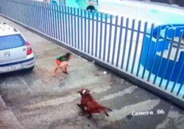 Niña defiende a perro de pitbull