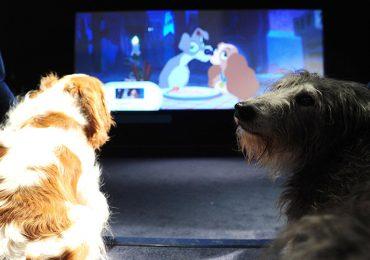 Perro callejero ahora es una estrella de Hollywood - Getty
